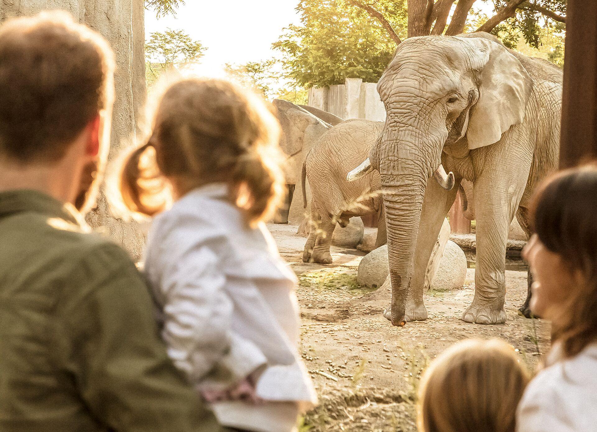 Safari - Family-Package