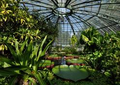Innenansicht des Viktoriahauses im Botanischen Garten der Universität Basel.